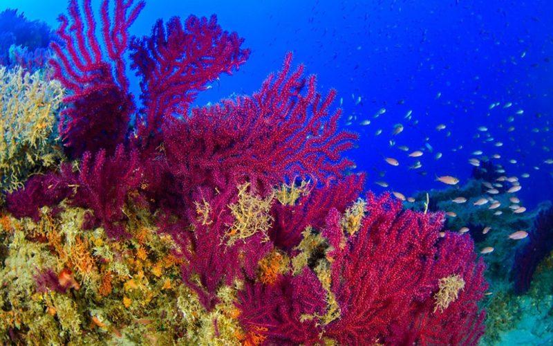 Un paradiso di coralli al largo di Monopoli